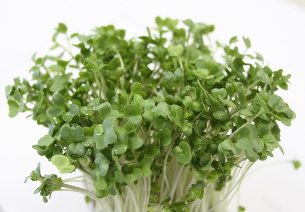 ブロッコリースプラウトの効果が凄い!育て方や食べ方をご紹介します!