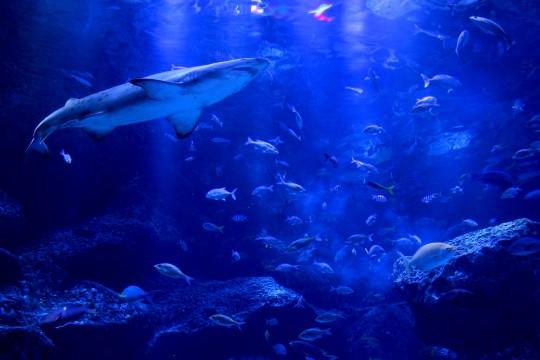 東京の水族館人気ランキングTOP5 !