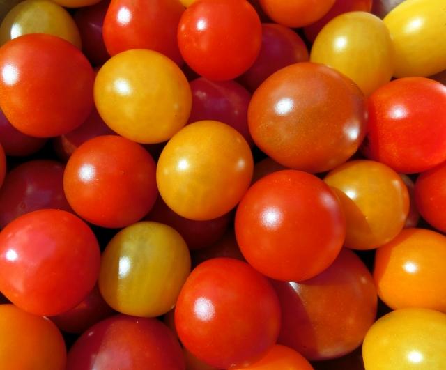 フルーツトマトの品種人気ランキング!甘い人気のトマトはどれ?
