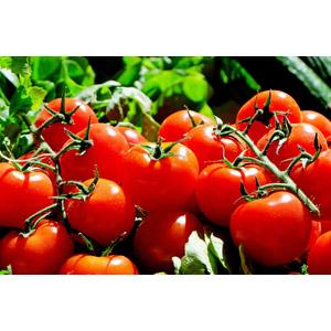 フルーツトマトの栄養は?糖度が高いのはダイエットに向かない?